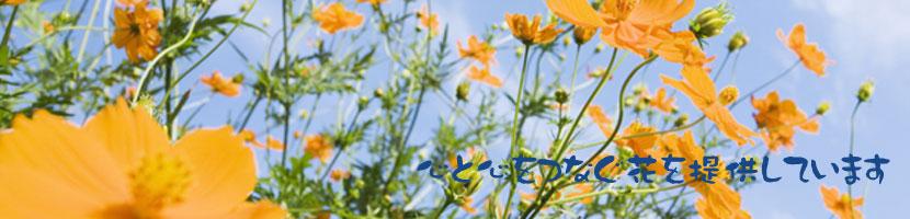 宮古島の花屋・フラワーショップは「花福」におまかせください